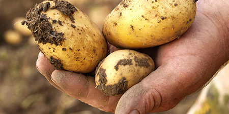 Q-Potato will continue in organic products after merger as well.